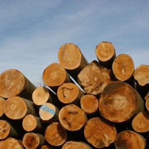 Massivholzbetten schlafstatt - betten stuttgart