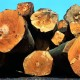 Holzbetten