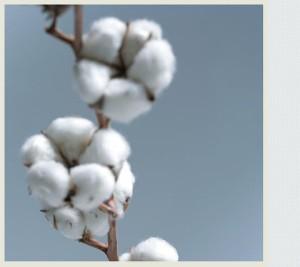 Baumwolle - Materialien