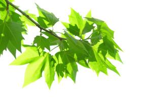 powerNap - Blätter