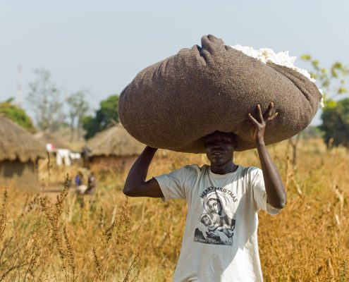 Cotonea - Baumwollfeld in Uganda