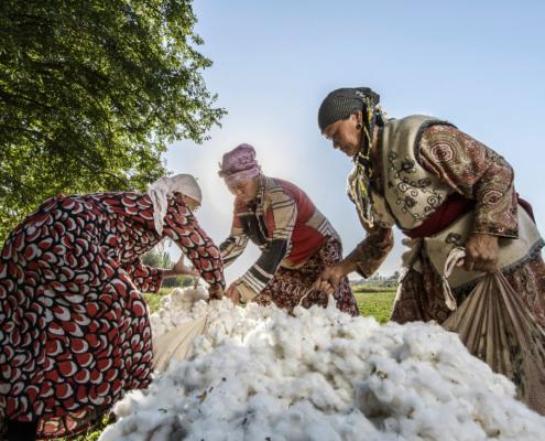 Bio-Baumwolle von Cotonea