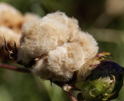 Sommbettdecken aus Baumwolle